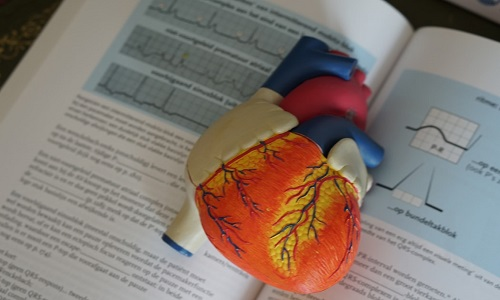 Model of a heart lying on an open book